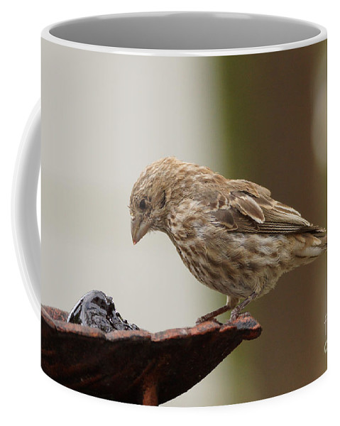 Birds Coffee Mug featuring the photograph Finch by Lori Tordsen