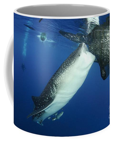 Day Coffee Mug featuring the photograph Whale Shark Feeding Under Fishing by Steve Jones