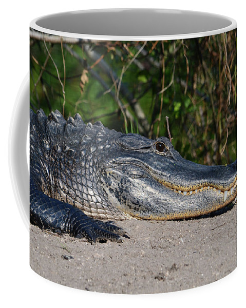 Grassy Waters Preserve Coffee Mug featuring the photograph 19- Alligator by Joseph Keane