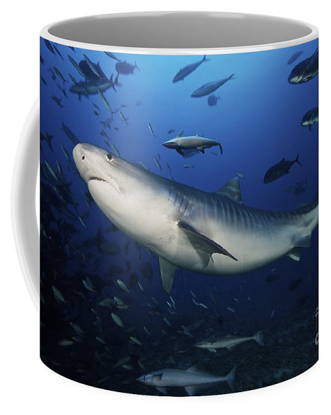 Fiji Coffee Mug featuring the photograph A Large 10 Foot Tiger Shark Swims by Terry Moore