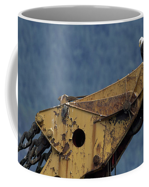 haines Coffee Mug featuring the photograph A Northern American Bald Eagle by Norbert Rosing
