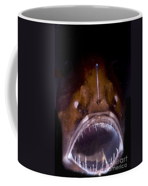 Fish Coffee Mug featuring the photograph Deep Sea Angler by Dante Fenolio