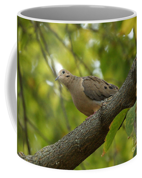Birds Coffee Mug featuring the photograph Dove by Lori Tordsen