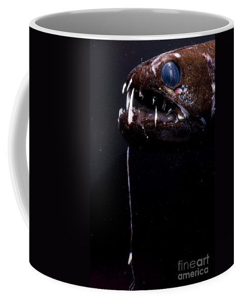 Stomias Coffee Mug featuring the photograph Dragonfish by Dante Fenolio