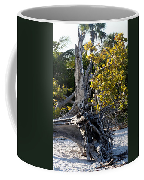 Driftwood Coffee Mug featuring the photograph Driftwood On The Beach by Christiane Schulze Art And Photography