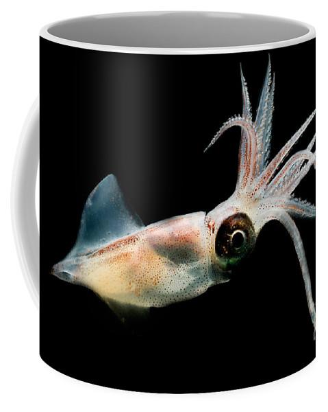 Eye Flash Squid Coffee Mug featuring the photograph Eye Flash Squid by Dante Fenolio