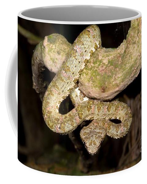 Eyelash Viper Coffee Mug featuring the photograph Eyelash Viper by Dante Fenolio