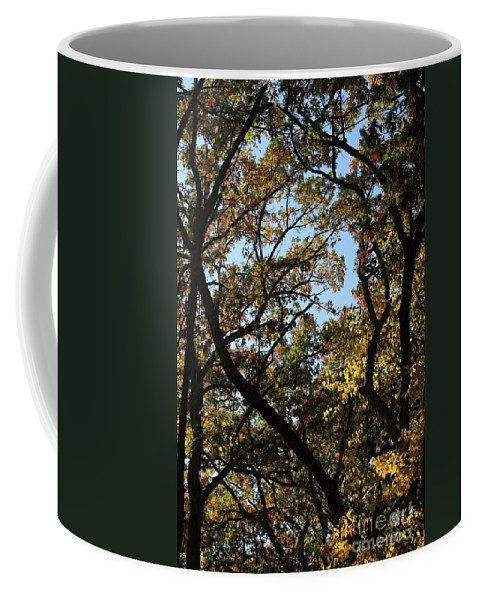 Fall Coffee Mug featuring the photograph Fall by Rick Rauzi
