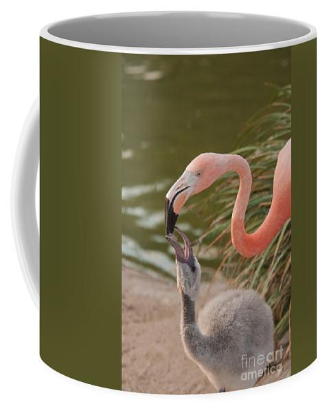Animals Coffee Mug featuring the digital art Flamingos by Carol Ailles