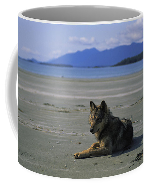 Pacific Ocean Coffee Mug featuring the photograph Gray Wolf On Beach by Joel Sartore