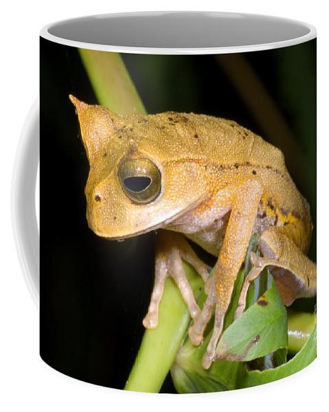 Marsupial Frog Coffee Mug featuring the photograph Marsupial Frog by Dante Fenolio