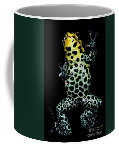Ranitomeya Imitator Coffee Mug featuring the photograph Mimic Poison Frog by Dant� Fenolio