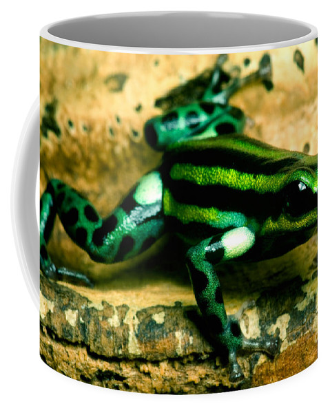 Ranitomeya Lamasi Coffee Mug featuring the photograph Pasco Poison Frog by Dant� Fenolio