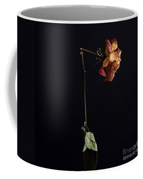 Black Background Coffee Mug featuring the photograph Rose by Bernard Jaubert