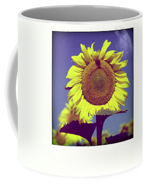 Auvergne Puy De Dome France French Agricultural Agriculture Crop Cultivate Nature Cultivation Rural Countryside Sunflowers Plant Plants Oil Yellow Flowers Flower Close Up Summer Bloom Blossom Blooming Coffee Mug featuring the photograph Sunflower by Bernard Jaubert