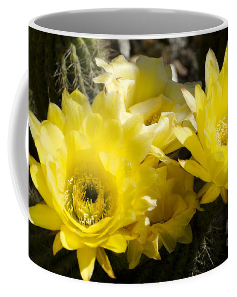 Cactus Coffee Mug featuring the photograph Yellow Cactus Flowers by Jim And Emily Bush