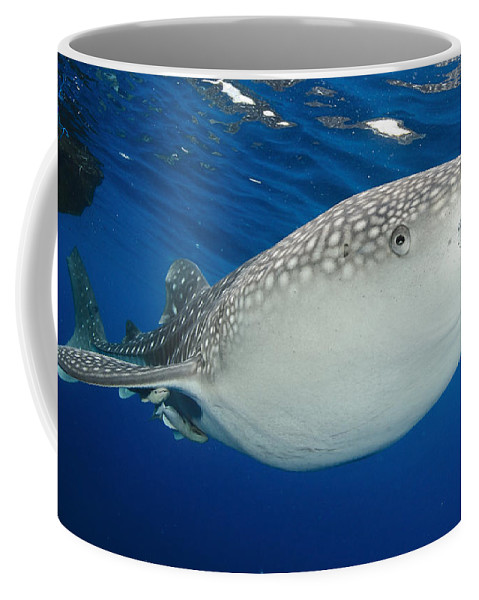 Day Coffee Mug featuring the photograph Whale Shark Feeding Under Fishing by Steve Jones