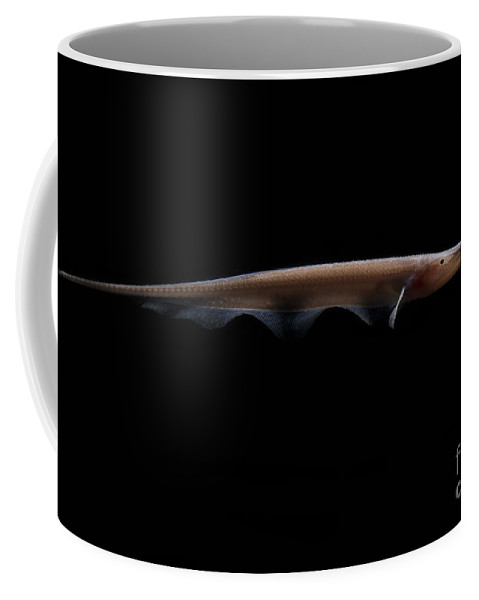Apteronotidae Coffee Mug featuring the photograph Amazon River Fish by Dante Fenolio