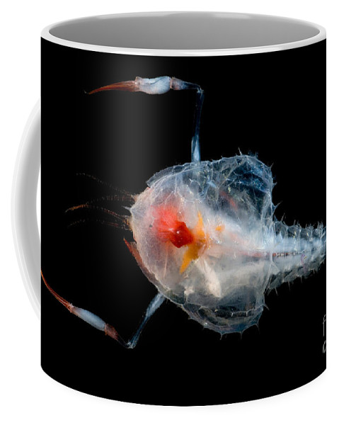Blind Lobsters Coffee Mug featuring the photograph Blind Lobster by Dant� Fenolio