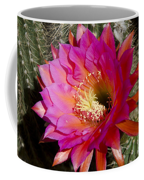 Red Coffee Mug featuring the photograph Dark Pink Cactus Flower by Jim And Emily Bush