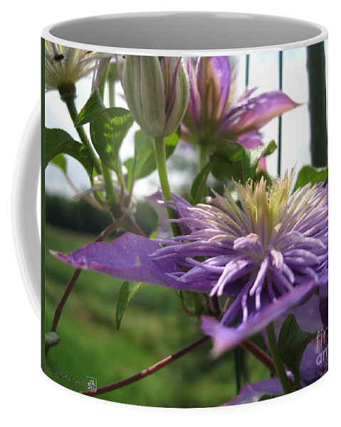 Double Clematis Coffee Mug featuring the photograph Double Clematis Named Crystal Fountain by J McCombie