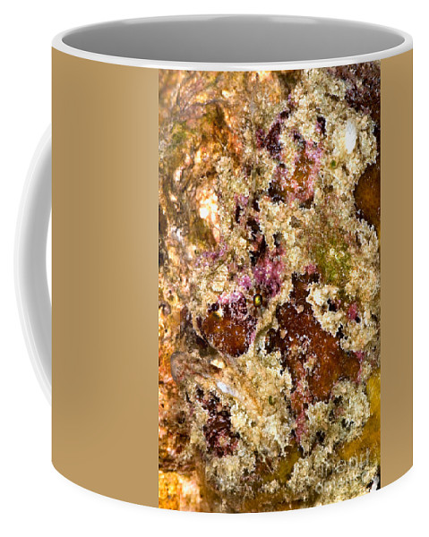 Antennarius Coffee Mug featuring the photograph Frogfish by Dant� Fenolio
