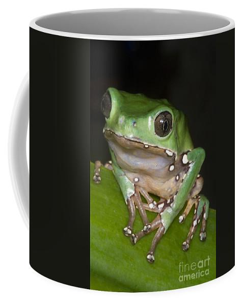 Phyllomedusa Bicolor Coffee Mug featuring the photograph Giant Monkey Frog by Dante Fenolio