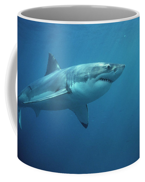 Mp Coffee Mug featuring the photograph Great White Shark Carcharodon by Mike Parry