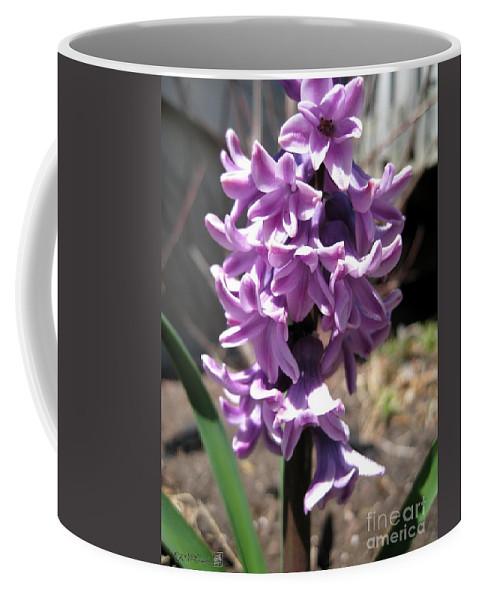 Hyacinth Coffee Mug featuring the photograph Hyacinth Named Splendid Cornelia by J McCombie