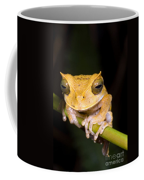 Marsupial Frog Coffee Mug featuring the photograph Marsupial Frog by Dante Fenolio