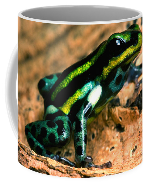 Ranitomeya Lamasi Coffee Mug featuring the photograph Pasco Poison Frog by Dant� Fenolio