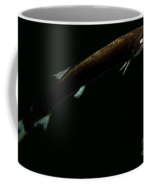 Snaggletooth Coffee Mug featuring the photograph Sickle Snaggletooth by Dant� Fenolio