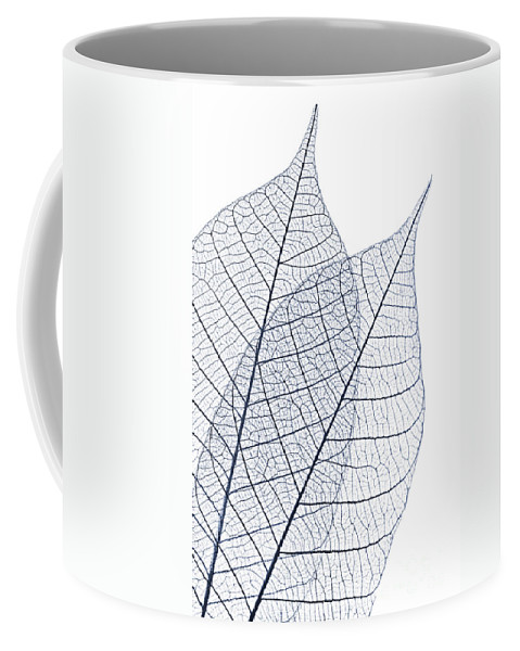 Skeleton Coffee Mug featuring the photograph Skeleton Leaves by Elena Elisseeva