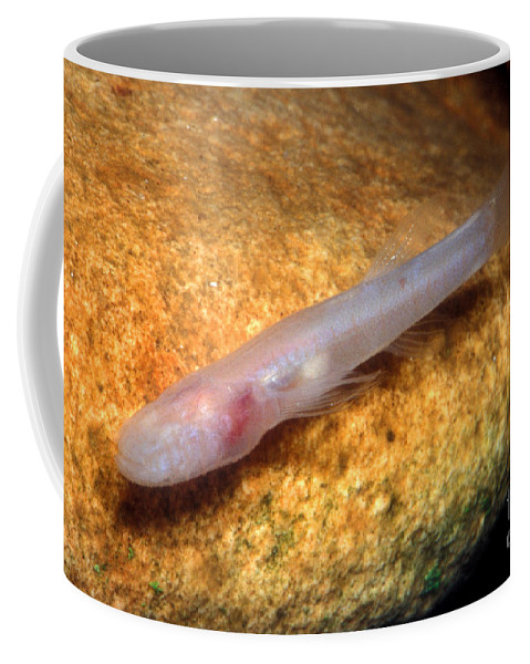 Nature Coffee Mug featuring the photograph Southern Cave Fish by Dante Fenolio