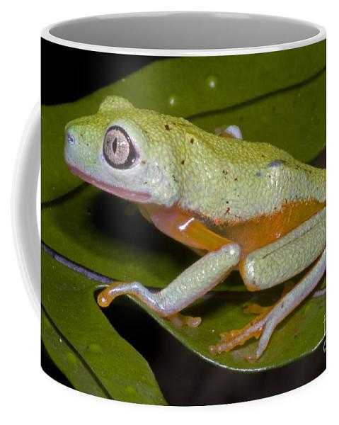 Hylomantis Lemur Coffee Mug featuring the photograph Tree Frog by Dante Fenolio