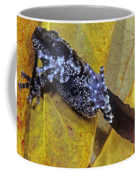 Nature Coffee Mug featuring the photograph Vietnamese Moss Frog by Dante Fenolio