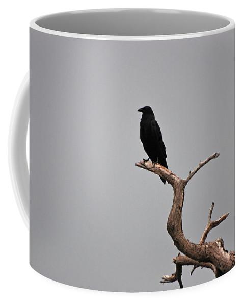 Black Crow Coffee Mug featuring the photograph 30- Black Crow by Joseph Keane