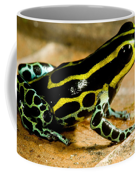 Ranitomeya Ventrimaculata Coffee Mug featuring the photograph Amazonian Poison Frog by Dant� Fenolio