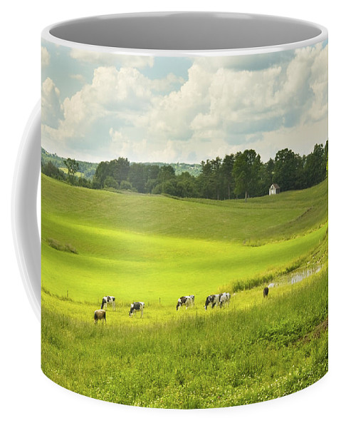 Cow Coffee Mug featuring the photograph Cows Grazing On Grass In Farm Field Summer Maine by Keith Webber Jr
