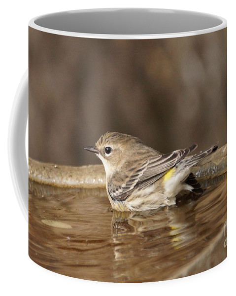Birds Coffee Mug featuring the photograph Yellow-rumped Warbler by Lori Tordsen