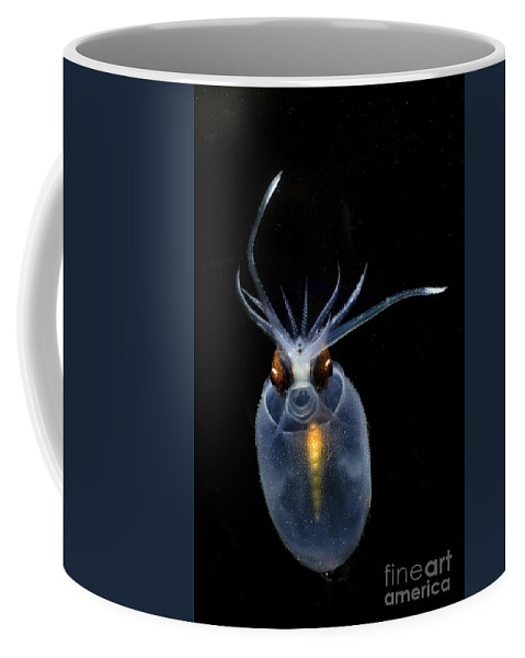 Cranchia Scabra Coffee Mug featuring the photograph Cockatoo Squid by Dante Fenolio