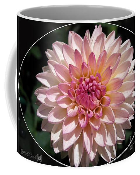 Mccombie Coffee Mug featuring the photograph Dahlia Named Valley Porcupine by J McCombie