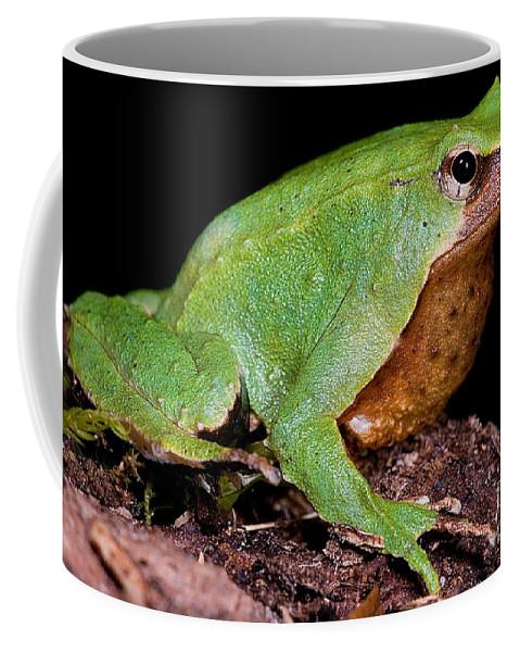 Darwin's Frogs Coffee Mug featuring the photograph Darwins Frog by Dante Fenolio