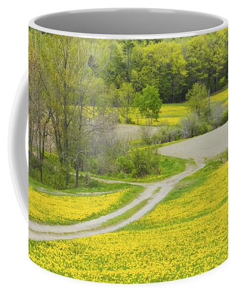 Spring Coffee Mug featuring the photograph Spring Farm Landscape With Dandelion Bloom In Maine by Keith Webber Jr