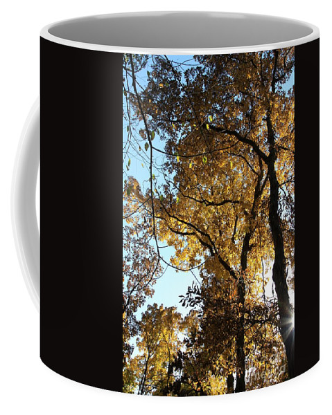 Fall Coffee Mug featuring the photograph Autumn Splendor by Rick Rauzi