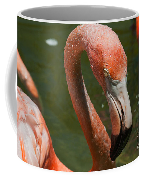 Animals Coffee Mug featuring the digital art Flamingo by Carol Ailles