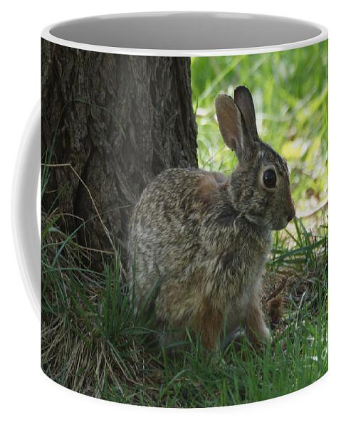 Rabbit Coffee Mug featuring the photograph Rabbit by Lori Tordsen
