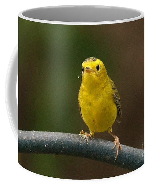 Birds Coffee Mug featuring the photograph Wilson's Warbler by Lori Tordsen