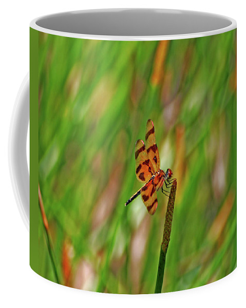 Coffee Mug featuring the photograph 8- Dragonfly by Joseph Keane