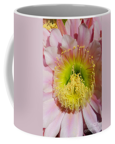 Pink Coffee Mug featuring the photograph Pink Cactus Flower by Jim And Emily Bush